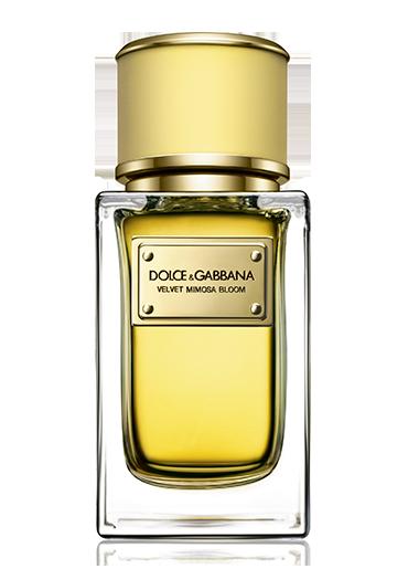 Dolce & Gabanna Velvet Mimosa Bloom